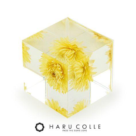 ハルコレ クリスタルアートリウム